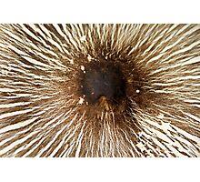Mushroom's Cap Photographic Print