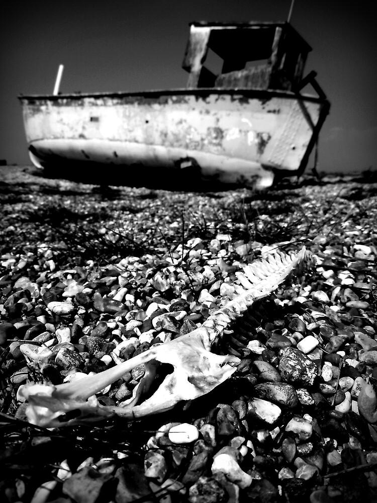 Bleached Bones by Josephine Pugh