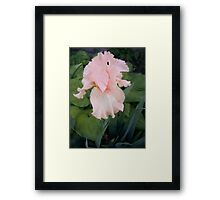 Before the Wind Came Framed Print