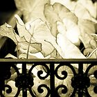 Leaves, Upper East Side, New York by Andrea Bell