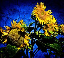 ...sunflowers... by Geoffrey Dunn