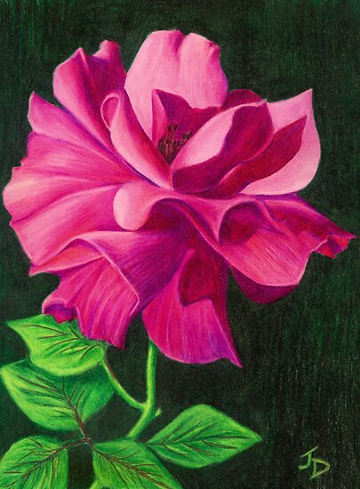 Pencil Rose by Janice Dunbar