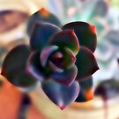 Blur of a beauty. by queenxtc