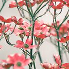 Dogwood Tree, Washington DC by Andrea Bell