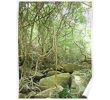 tall_spiny_trees growing amongst huge moss covered boulders Poster