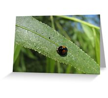 Ashy Gray Lady Beetle (1 of 2 Color Forms) Greeting Card