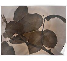 Rose Leaves 'n' Rain Drops (1) Poster
