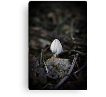 Lonely Little Mushroom Canvas Print