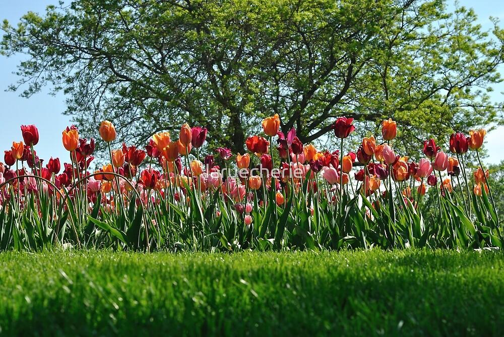 A Tree Among Tulips  by laruecherie