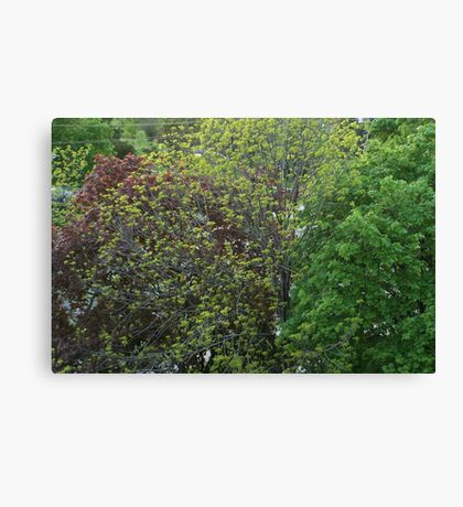 Trees Of Many Colours Canvas Print