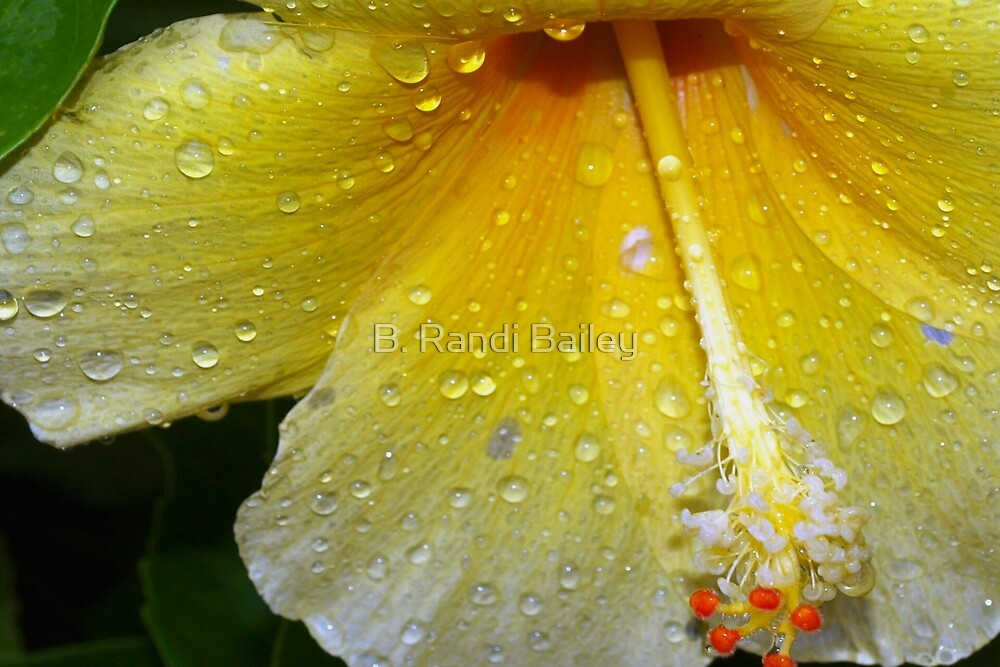 Drenched by a tropical storm by ♥⊱ B. Randi Bailey