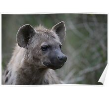 Spotted Hyena Portrait Poster