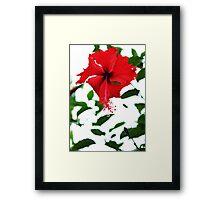 Red Hibiscus Flower Framed Print
