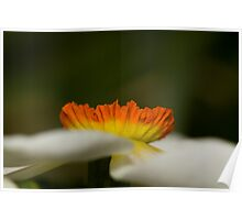 Daffodil crown 2 Poster