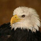 Eagle by Inga McCullough