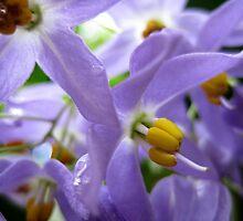 purplelove by Joel Fourcard