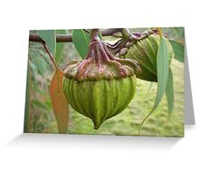 Australian Gumnut Greeting Card