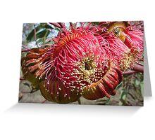 Gum Tree Flower Greeting Card