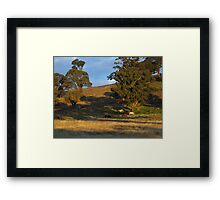 Meanwhile back at the horse paddock! Framed Print