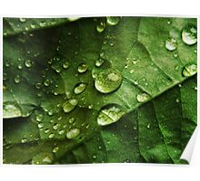 Leaf with droplets Poster