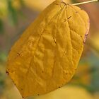 Yellow Leaf by v-something