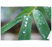 Bamboo Drops. Poster