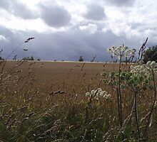 lullingstone wheatfield by lurchergirl