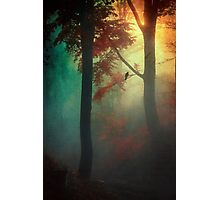 Waking Light Photographic Print