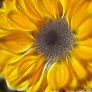 Mini Sunflower by Kerensa Davies