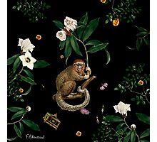 Monkey World: Amber-Ella Photographic Print