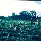 strawberry pickers by lols