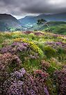 Snowdonia - Heather & Gorse above Beddgelert by Angie Latham