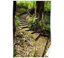 Bushland Steps Poster