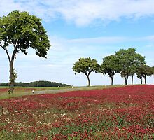 Red Clover Field by karina5