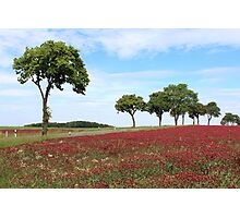 Red Clover Field Photographic Print