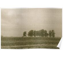 Trees along a farm field Poster