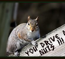 """You Drive Me Nuts !!!"" by Gail Jones"