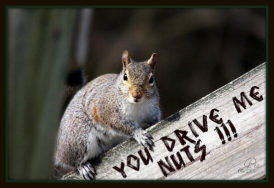 "Gail Jones › Portfolio › ""You Drive Me Nuts !!!"""