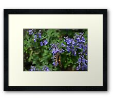 Brown and White Butterfly on Purple Flowers Framed Print
