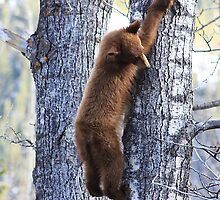 Just Hanging Around by Alyce Taylor