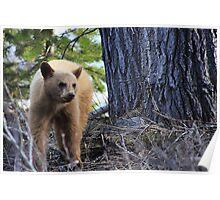 Blonde Cub Poster
