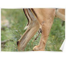 Remarkable Survival Skills - Kruger National Park  Poster