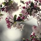 Spring moods by Beata  Czyzowska Young