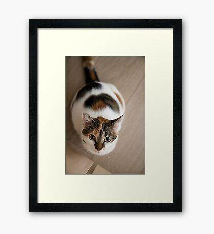 Mew? Framed Print