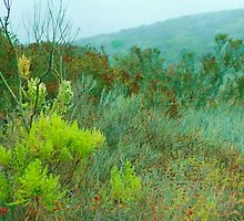 Brush and Plants on a Rainy Day by IanJGregory