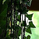 his ivy... by dabadac