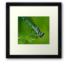 Common Blue Damselfly Framed Print