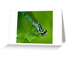Common Blue Damselfly Greeting Card