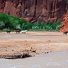 Navajo Horses by ten2eight