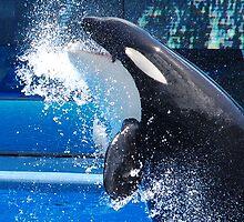 Orca by TonyaAnjean